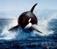 专注于鲸鱼玩家是否会给开发者带来风险?