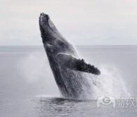 业内人士探讨开发者该如何定义鲸鱼玩家