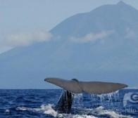 为何不该针对于鲸鱼用户开发手机游戏?