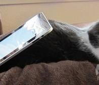 每日观察:关注2013年平板电脑及手机出货量(10.22)